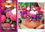 Hướng dẫn gieo hạt giống hoa cúc các loại