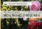 Bộ sưu tập hơn 60 giống hoa hồng ngoại Siêu leo trên 10 mét