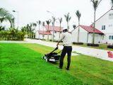 Dịch vụ cắt cỏ thuê, cắt tỉa cây cảnh, hàng rào chuyên nghiệp tại Hà Nội