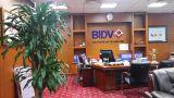 Hình ảnh thực tế cây văn phòng tại Ngân hàng BIDV của Cây cảnh Thăng Long