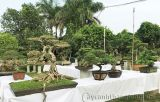 Cập nhật tình hình trước buổi khai mạc Triển lãm Hoa và Nghệ thuật Bonsai