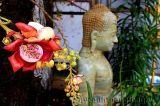 Hoa vô ưu hoa thiêng thơm ngát