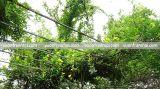 Giải pháp tăng độ che phủ của cây xanh nâng cao chất lượng sống đô thị