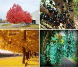 Top 10 loại cây cực độc đáo tại Trang trại hoa cây cảnh Thăng Long