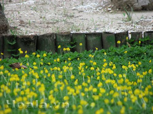 Cây cỏ lạc