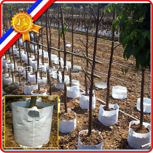 Túi vải địa kỹ thuật trồng cây