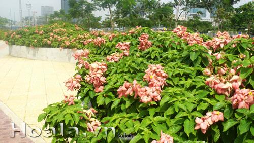 Mẫu Vườn đứng 44