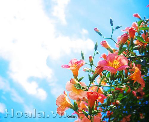 Hoa Đăng tiêu