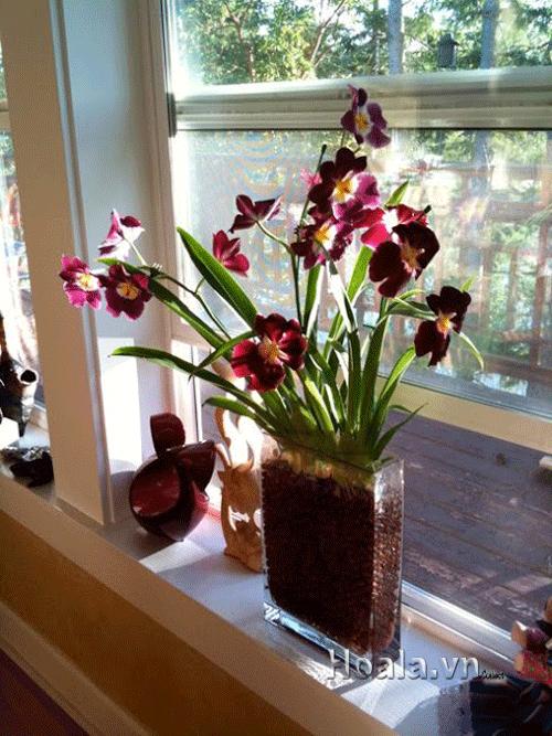 Sỏi nhẹ trồng lan, hoa cây cảnh