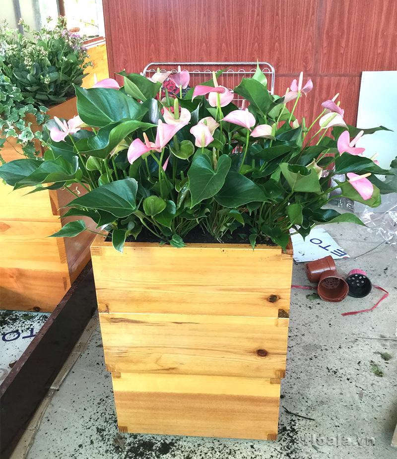 Bồn chậu gỗ trồng hoa cây cảnh 94
