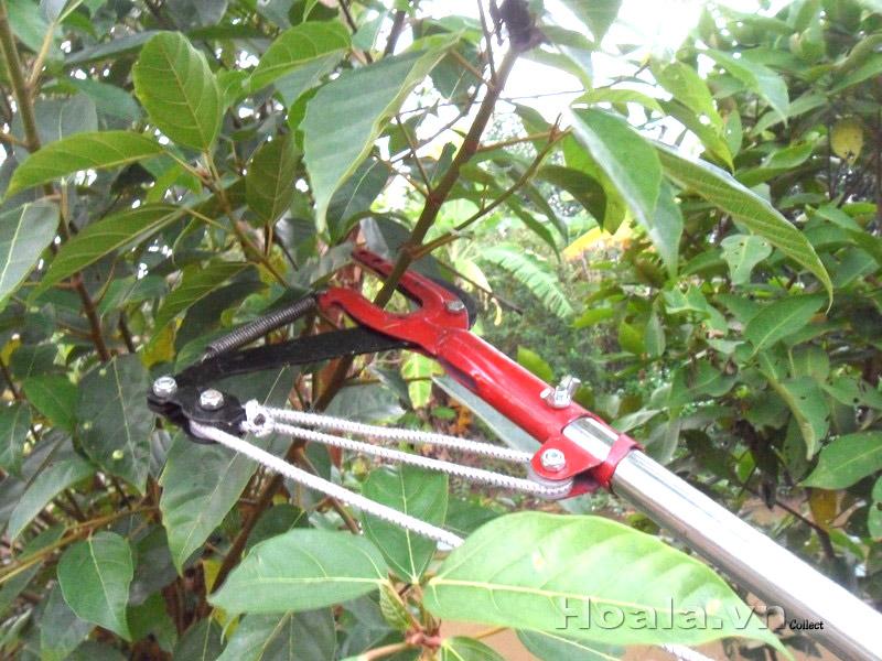 Kéo cắt cành trên cao Minh Phát HM3 - 5m