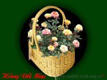 Điện hoa - Hồng đổi màu