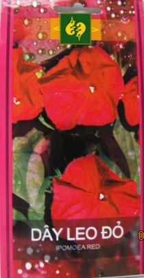 Hạt giống Hoa leo Teen đỏ