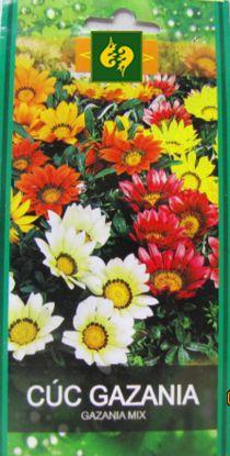 Hạt giống Hoa Cúc Gazania