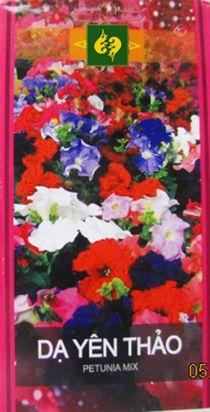 Hạt giống hoa Dạ yến thảo đơn nhiều màu