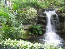 Thác nước và cây trong nội thất