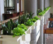Tạo hình viền cây nội thất tầng cao