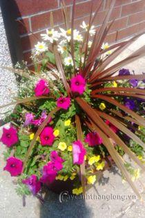 Mẫu Chậu hoa tổ hợp 74