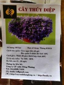 Hạt giống hoa Thúy Điệp