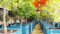 Bồn gỗ trồng hoa cây cảnh 21