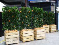 Bồn gỗ trồng hoa cây cảnh 40