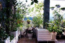 Bồn gỗ trồng hoa cây cảnh 33