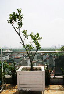 Bồn gỗ trồng cây cảnh 44