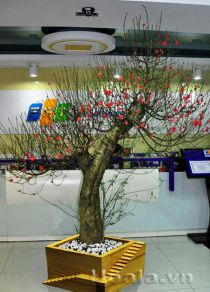 Chậu gỗ trồng hoa cây cảnh 69