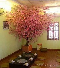 Chậu gỗ trồng hoa cây cảnh 71