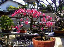 Chậu gỗ trồng hoa cây cảnh 77