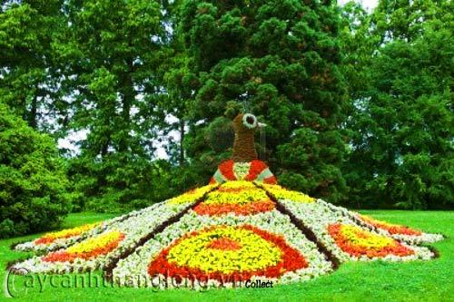 Bồn hoa 11