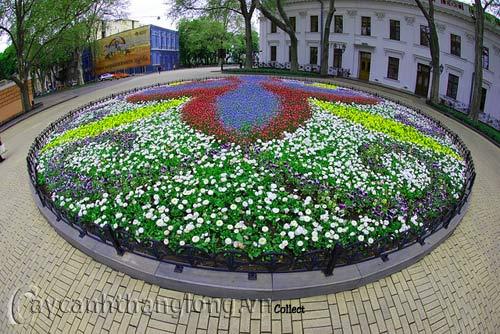 Bồn hoa 15