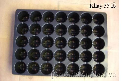Khay gieo hạt 35 lỗ