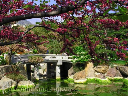 Mẫu vườn Phương Đông 8