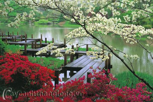 Mẫu vườn Phương Đông 13