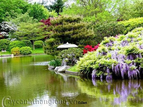 Mẫu vườn Phương Đông 16