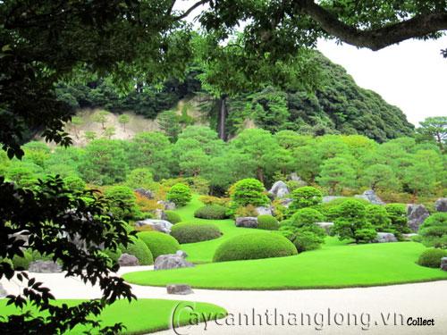 Mẫu vườn Phương Đông 21