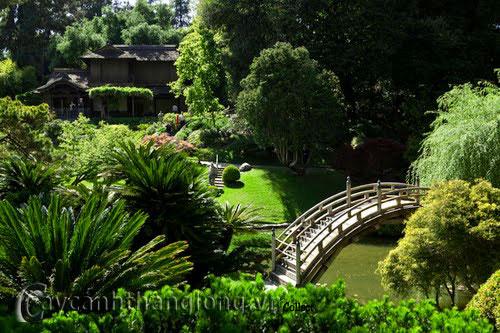 Mẫu vườn Phương Đông 23