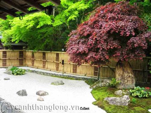 Mẫu vườn Phương Đông 25
