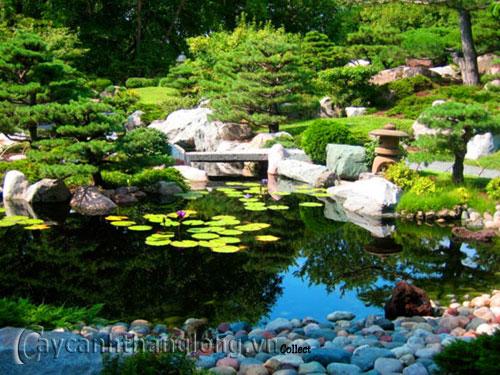 Mẫu vườn Phương Đông 26