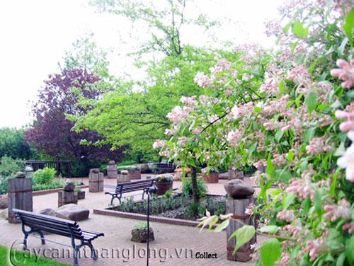 Mẫu vườn tổng hợp 1