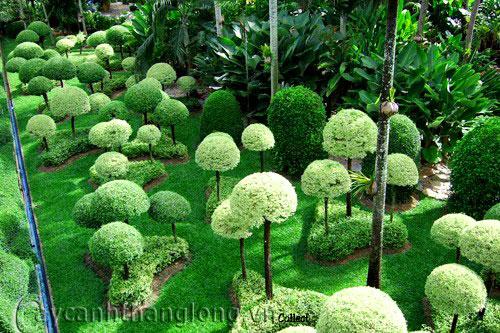 Mẫu vườn tổng hợp 23