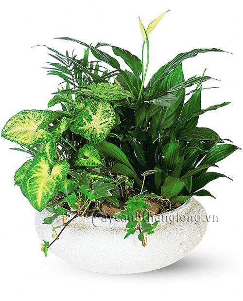 Tổ hợp thực vật