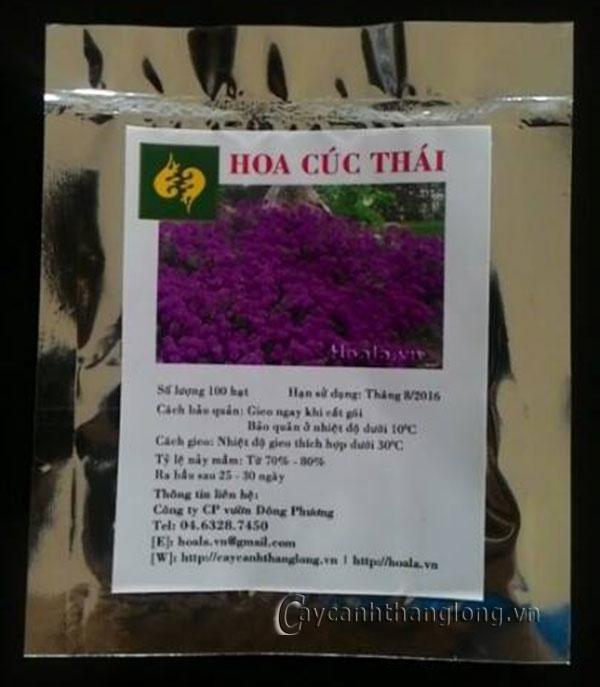 Hạt giống hoa Cúc Thái