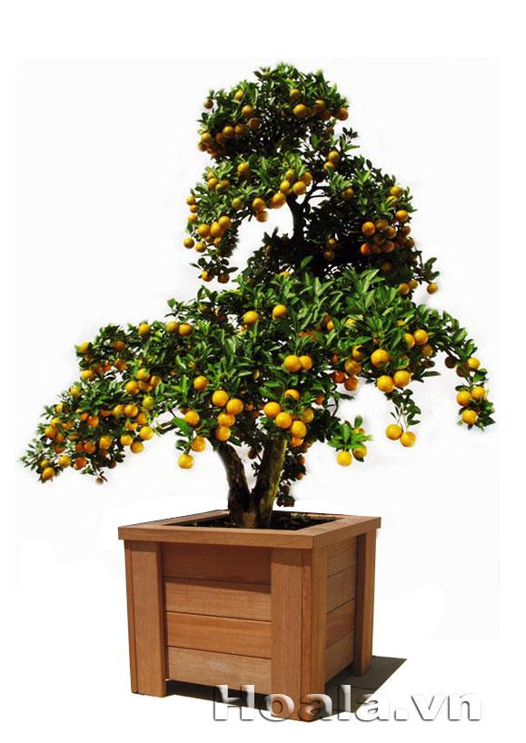 Chậu gỗ trồng cây 68