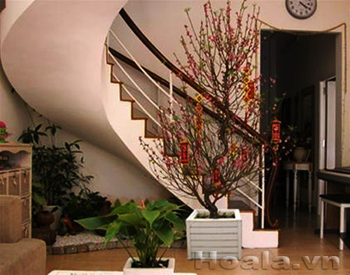 Chậu gỗ trồng hoa cây cảnh 73
