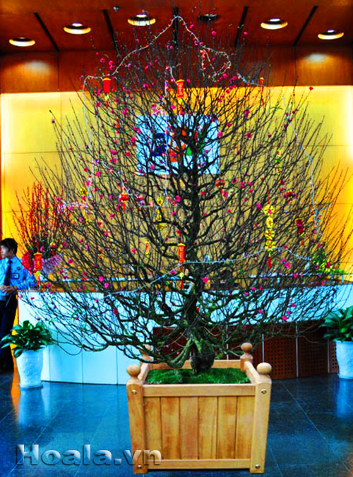 Chậu gỗ trồng hoa cây cảnh 80