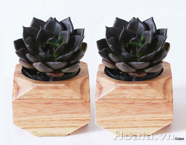 Chậu gỗ trồng cây để bàn 87
