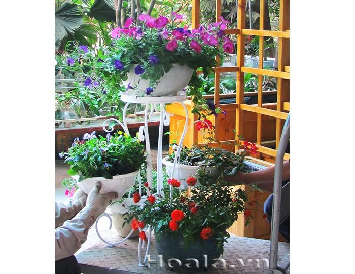 Giá để chậu hoa 203