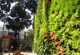 Mẫu Vườn đứng 88